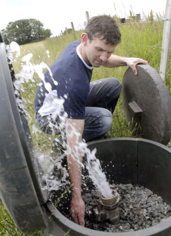 Kummene på gården til Tobias Skretting på Jæren samler klart og friskt kildevann fra grunnen