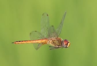 Insektets vanvittige reise kan være mulig