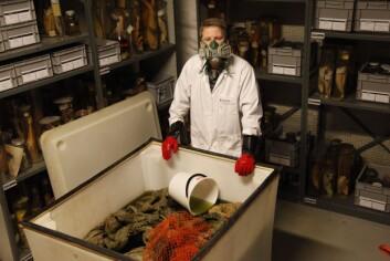 Marinbiolog Torkild Bakken og karet med kjempeblekkspruter på sprit. (Foto: Per Gätzschmann, NTNU Vitenskapsmuseet)
