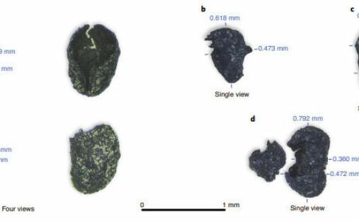 Arkeologer har funnet det tidligste sporet etter bruk av tobakk