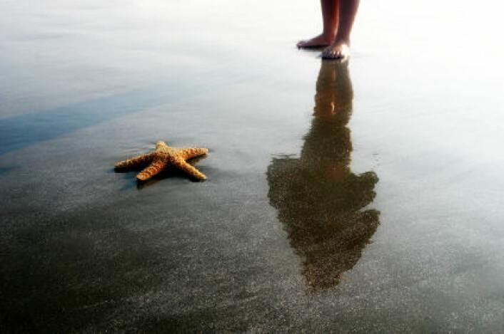 Møte på stranda. For første gang er det gjort beregning av hvor mye karbon sjøsterner og andre pigghuder opptar. (Foto: iStockphoto)