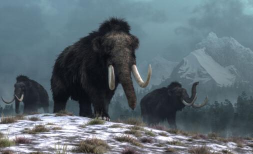 Mammuter og andre store dyr overlevde i nord mye lenger enn det som har vært kjent