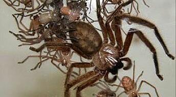 Så rart være sosial edderkopp