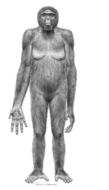 Slik tror forskerne at Ardiså ut. (Illustrasjon: J.H. Matternes/Science)