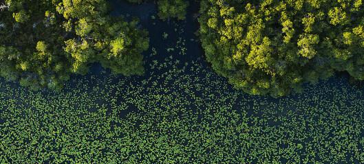 Denne mangroveskogen ble fanget på land før forrige istid