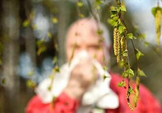 New methods in pollen identification