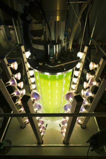 Testfasilitet for mikroalgaer ved Wageningen University. (Foto: Wageningen University)