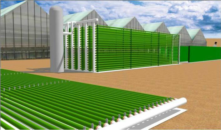Tegning av testfasiliteten AlgaePARC, som for tida er under bygging. (Foto: Science/AAAS)