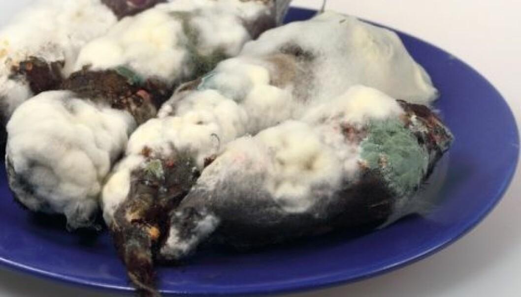Bakterier kan skape problemer i en kompleks matvarekjede. Foto: Shutterstock