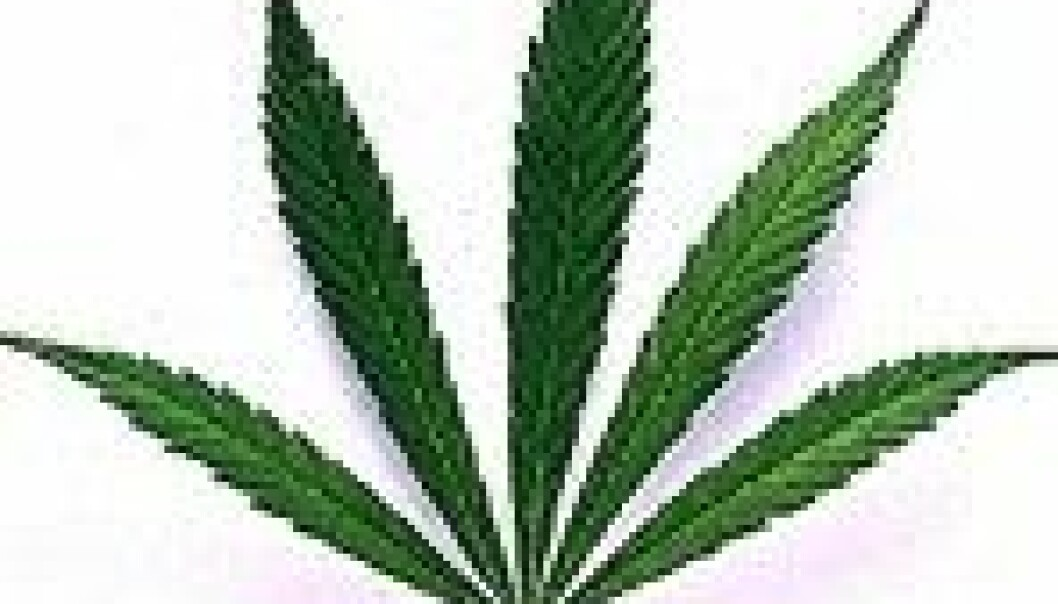 Mer selvskading hos cannabisbrukere