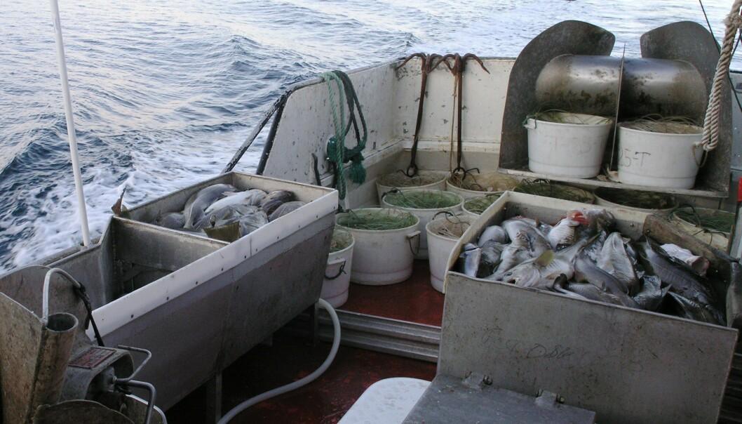 Norsk linefiske går tilbake