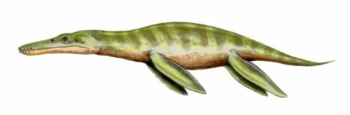 Liopleurodon (Illustrasjon: Nobu Tamura)