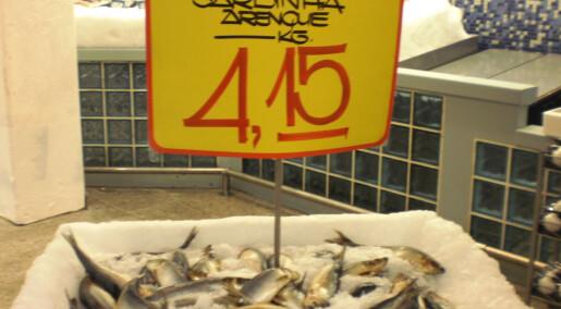 Forskeren forteller: Sild som sardin i Brasil