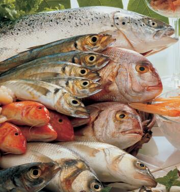 """""""Du treng ikkje vere redd for å få brystkreft berre fordi du ikkje et fisk. Ein ny studie visar at fiskeinntak ikkje har nokon innverknad på brystkreftutvikling."""""""