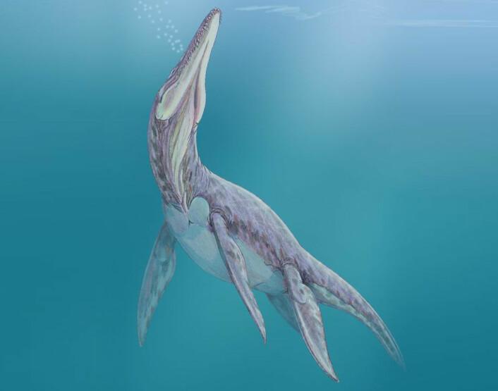 Megalneusaurus (Illustrasjon: Public domain)