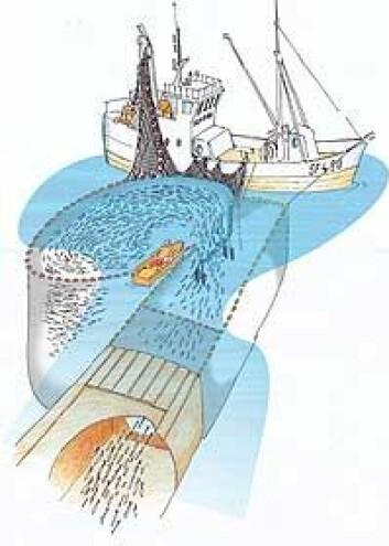 """""""Slepeposen kan gjøre håndtering og transport enklere og med mindre stress for fisken."""""""