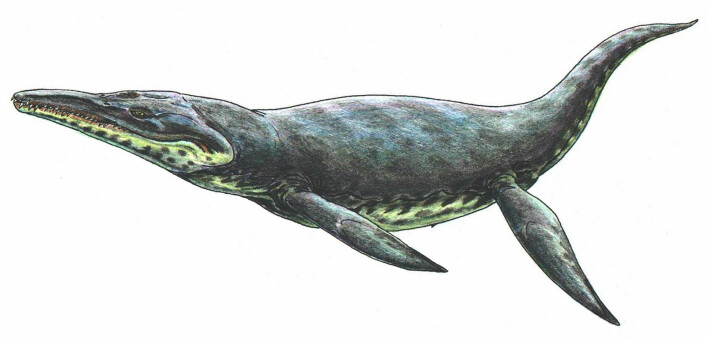 Kronosaurus (Illustrasjon: Public domain)