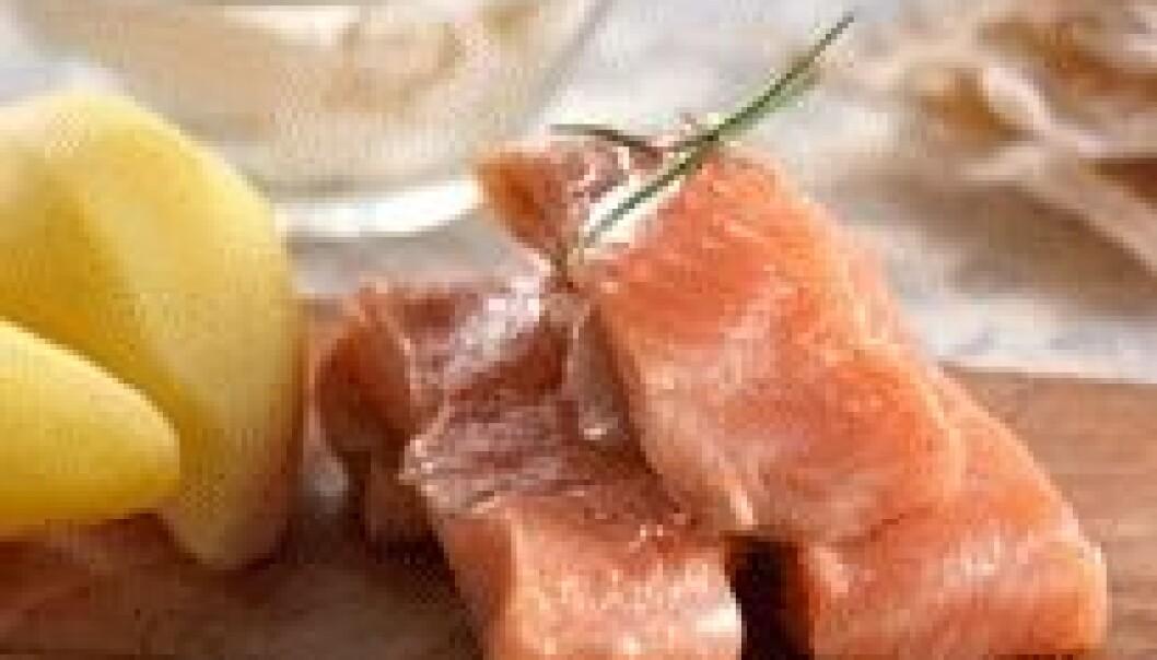 I dag er rakfisken hovedsakelig et sesongsprodukt. (Foto: Mari Svenningsen, Opplysningskontoret for kjøtt)
