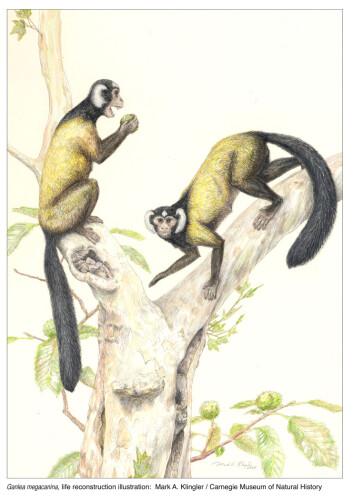 """""""Slik tror man Ganlea megacanina så ut da den levde for 38 millioner år siden. (Illustrasjon: Mark A. Klingler/Carnegie Museum of Natural History)"""""""