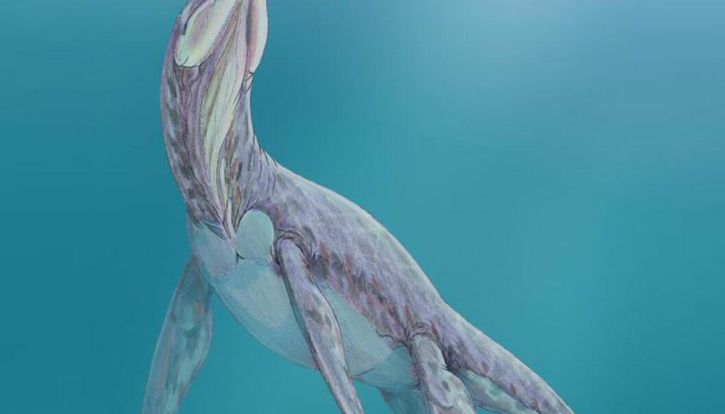 Om pliosaurer