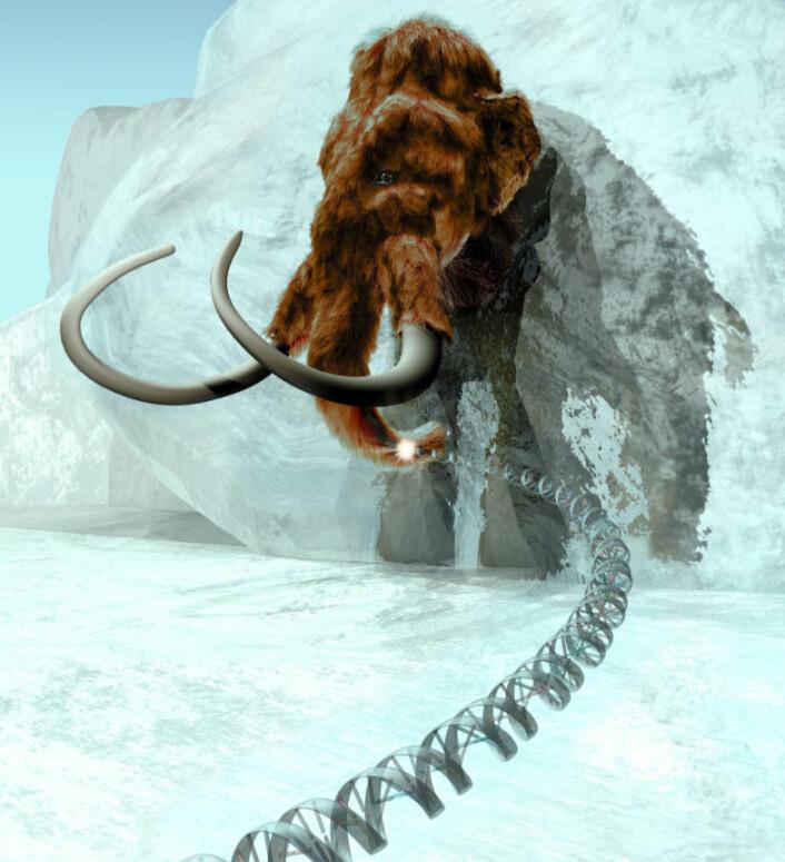 Ullhåret mammut (Mammuthus primigenius). (Illustrasjon: ExhibitEase LLC - Steven W. Marcus)