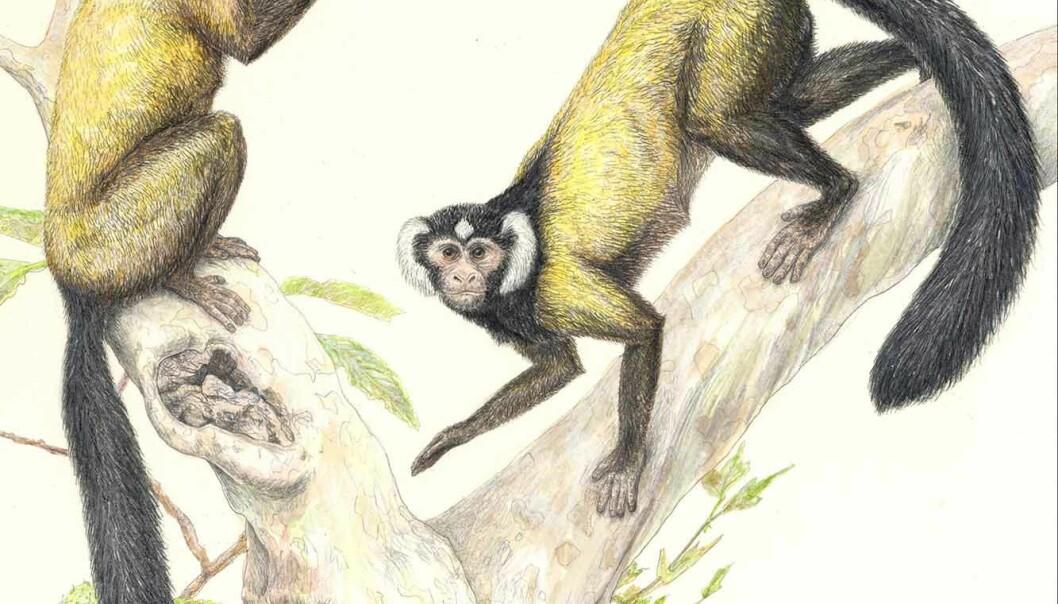 - Ida nærmere lemurer enn mennesker