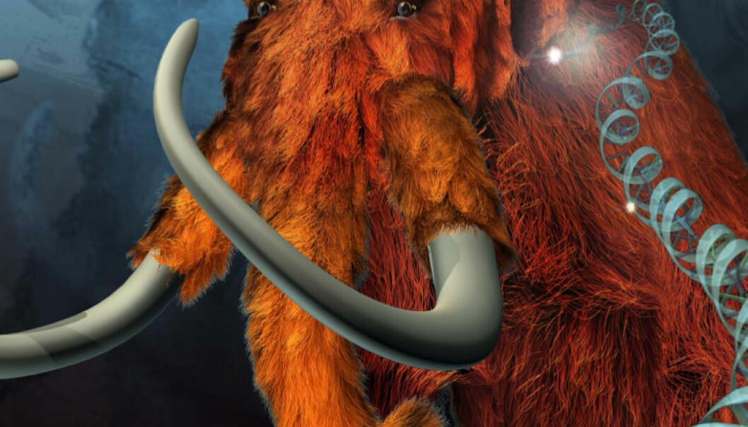 Ullhåret mammut. (Illustrasjon: ExhibitEase LLC - Steven W. Marcus)