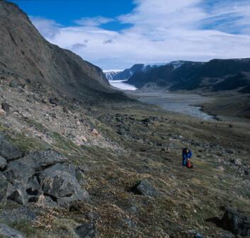 """""""Dette unike steppeområdet på Svalbard kan forsvinne om klimaet blir våtere. Det krever veldig spesielle levevilkår med mye vind og tørt jordsmonn. (Foto: Privat)"""""""