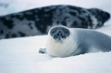 """""""Plantelivet på Svalbard har vært veldig ujevnt kartlagt. Fokuset har vært størst på de store pattedyrene isbjørn og sel. (Foto: Jo Jorem Aarseth)"""""""