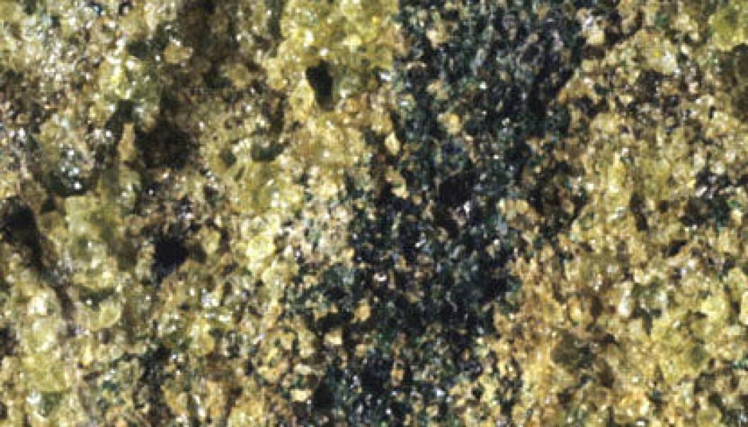 Peridotitt (Foto: Omphacite, Wikimedia Commons)