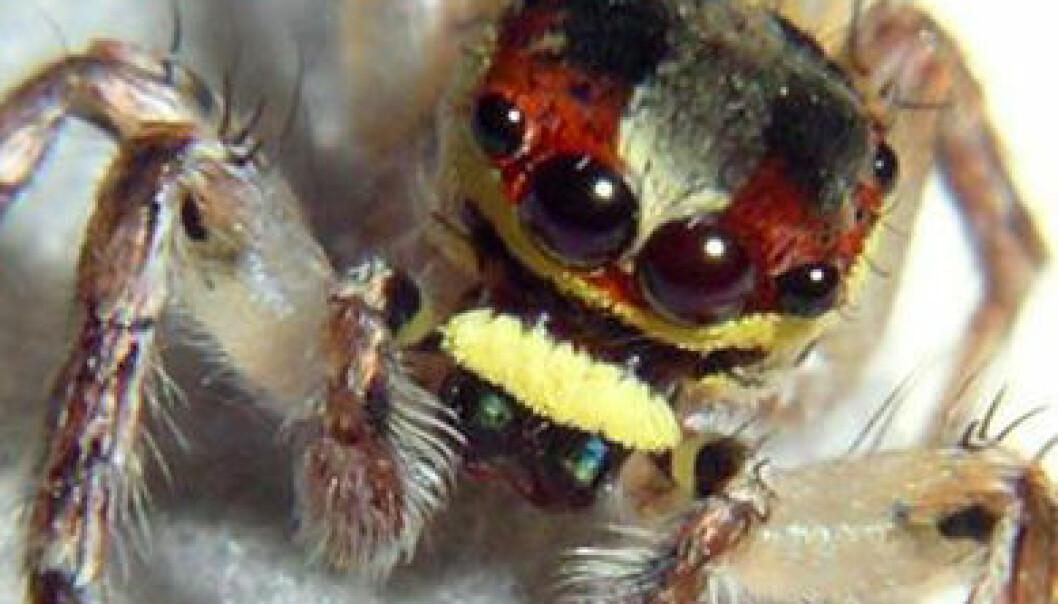 Fant over femti nye arter