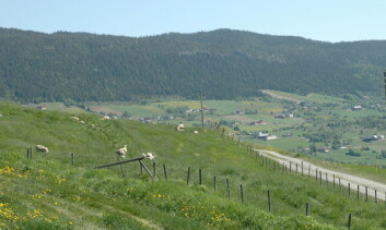 Det er fortsatt overskudd av fosfor i det meste av landbruksjorda i Norge, spesielt i de husdyrtette områdene. (Foto: Jon Schärer)