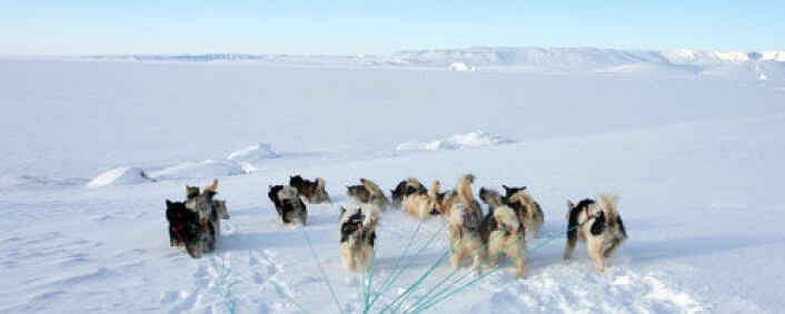 Naturlige klimaendringer kan forklare iallfall 50-60 prosent av endringene i iskappen på Grønland. (Foto: Shutterstock)
