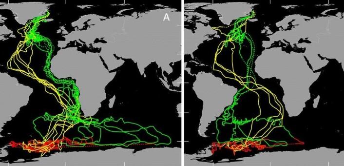 """""""Geologgerne registrerte disse mønstrene langs ternenes migrasjonsrute. Kartet er hentet fra artikkelen i PNAS som ble publisert denne uka. (Kilde: Carsten Egevang)"""""""