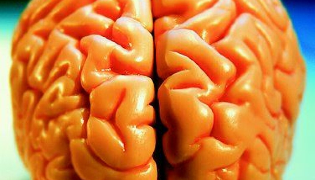 """""""Stor hjerne krever mye energi."""""""