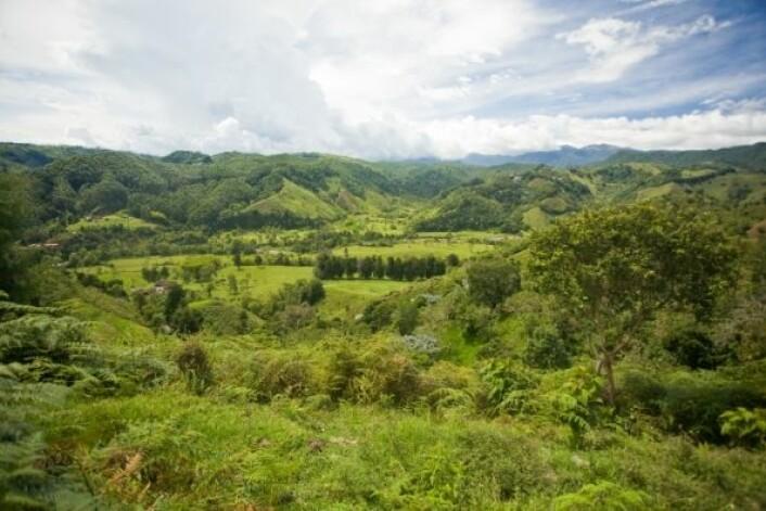 Kaffe gir viktige eksportinntekter for Colombia. Det meste av kaffedyrkingen skjer i den vestlige delen av landet. (Foto: iStockphoto)