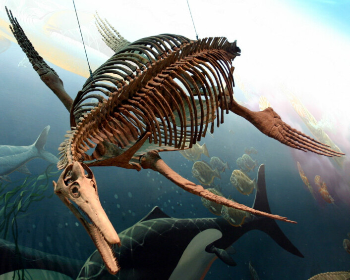 Dolichorhynchops. National Museum of Natural History, Washington D. C. (Foto: Ryan Somma)