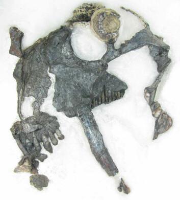 Fossilet ble funnet i Rio do Rastro-formasjonen i det sørlige Brasil. (Foto: Juan Cisneros)