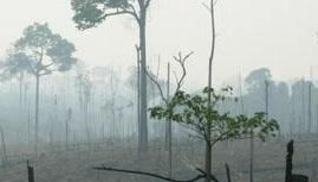 Regnskog, Brasil Amazonas. (Foto: Alexander Lees)