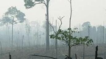 Bøker: Mobilisering mot avskoging