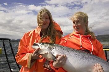 Avkom fra to fisk med god IPN-resistens blir nærmest immun mot sykdommen. (Foto: Aqua Gen)