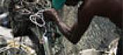 Mye miljøgifter i Vest-Afrika