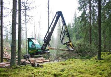 Skogen i Norge har lenge vokst raskere enn den hogges. Resultater er at vi får mer eldre skog, men upåvirket er den ikke. (Foto: Jørund Rolstad)