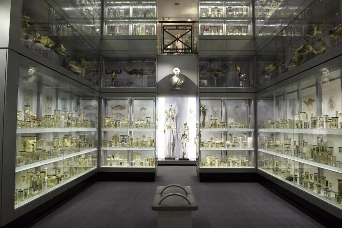 I de to etasjene i Krystallgalleriet ved Hunterian Museum står anatomiske og patologiske prøver på rekke og rad. De ble samlet inn av kirurgen og pioneren John Hunter (1728-1793). (© The Hunterian Museum at The Royal College of Surgeons)