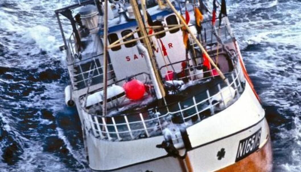 Mer torsk i Barentshavet