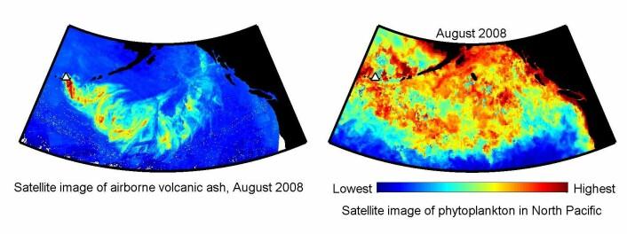 Satelittbilder av det nordøstlige Stillehavet. Til venstre spredning av asken fra Kasatochi, med vulkanen markert med en trekant. Til høyre planktonblomstring august 2008. Rød farge indikerer sterk oppblomstring. (Illustrasjon: Geophysical Research Letters/ Roberta C. Hamme)