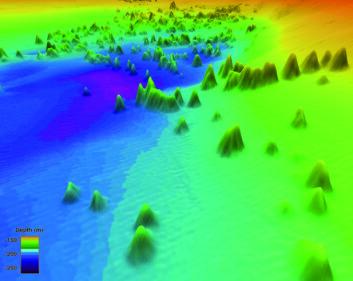 Perspektivbilde over området med størst konsentrasjon av koraller. Bildet er tatt fra den sørlige del av området, mot nordvest. Korallene stikker opp som fjelltopper fra en relativt flat bunn. Horisontal utstrekning på enkeltstående korallrev er rundt 100-200 meter. Flere sammenhengende korallkjeder er 300-400 meter lange. (Illustrasjon: Statens kartverk Sjø/MAREANO)