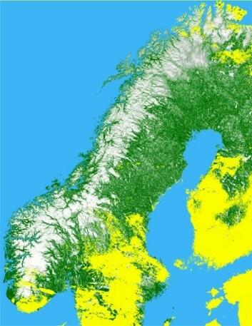 Snøkart over Skandinavia. Gult angir områder med skyer eller uten satellittdekning. (Illusttrasjon: Norut)