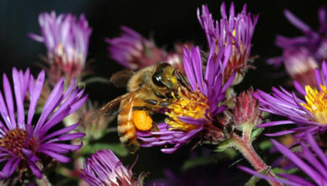 Biegenomet er kartlagt