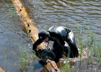 Helene Løvstrand Svarva henter opp en eldgammel furustokk fra Øvre Teppingtjønn i Bøverdalen. Når biologene har saget av sin prøveskive, går stokken igjen til vanns. (Foto: Terje Thun)